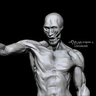 estudio anatomia 3d ecorche